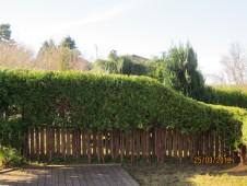 Hvordan få en fin Tujahekk hos Minde hagedesign