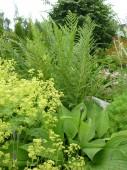 Planter som vil passe sammen en Tujahekk hos Minde HAgedesign