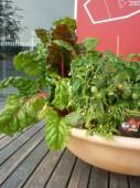Plant grønnsaker i krukkene