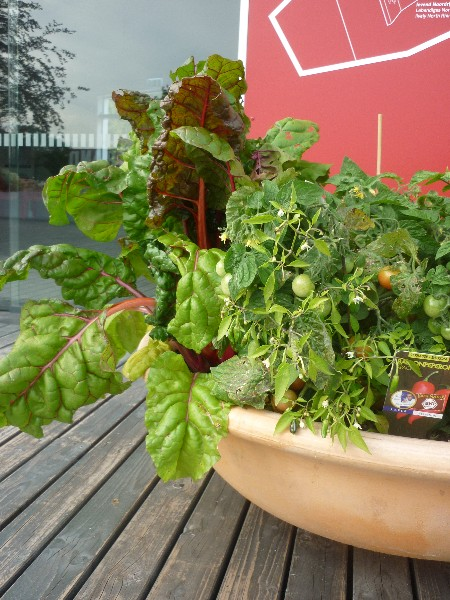 10 punkter på veien mot en økologisk hage