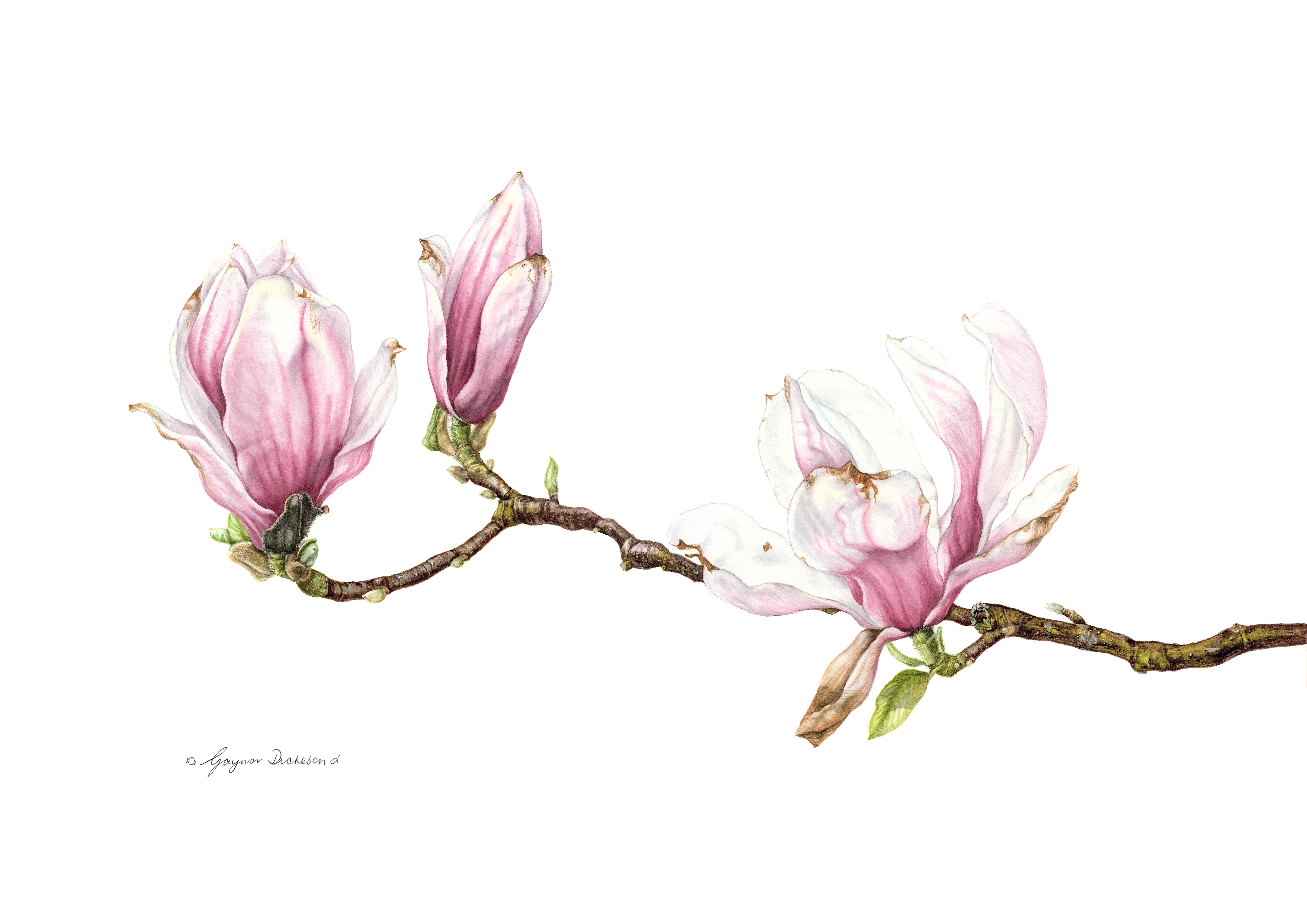 Den Norske forening for botaniske kunstnere