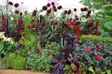 Ny spennende plantesammensetting